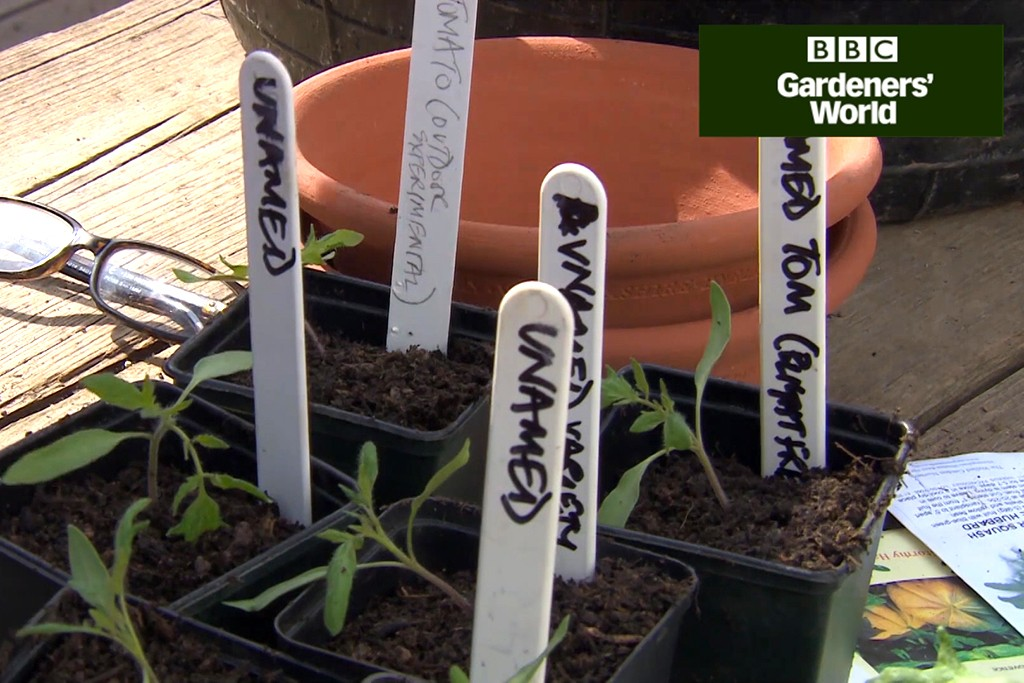 Monty Don's tomato trial part two video