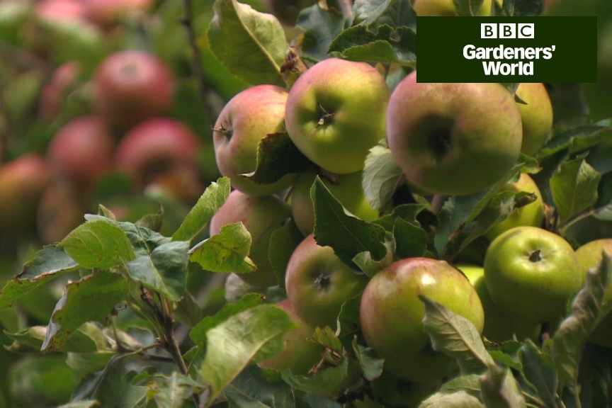 How to pick apples video