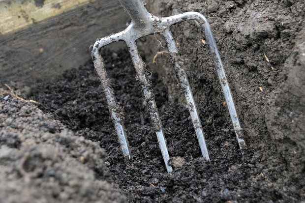 Forking compost into the soil