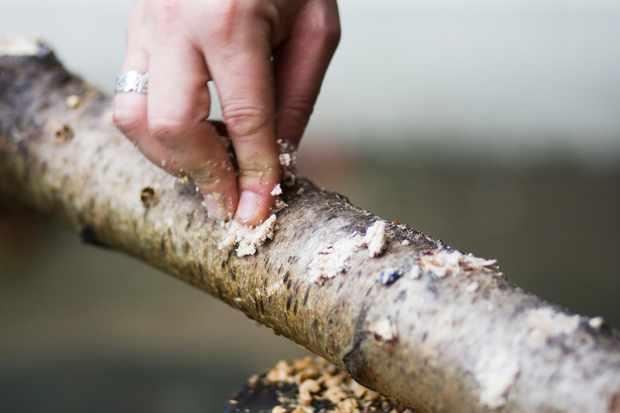Make a natural log feeder