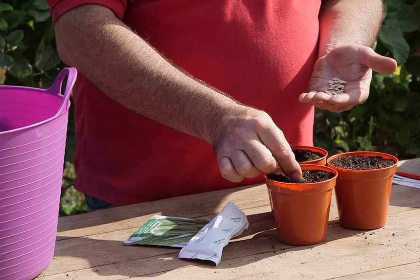 Sowing large seeds