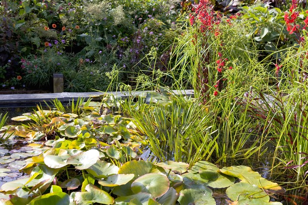Waterlilies and other pond plants in a well-planted garden pond