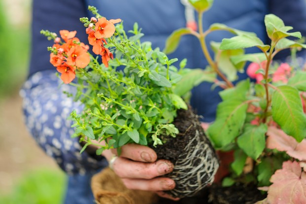 How to create a summer hanging basket -planting trailing plants