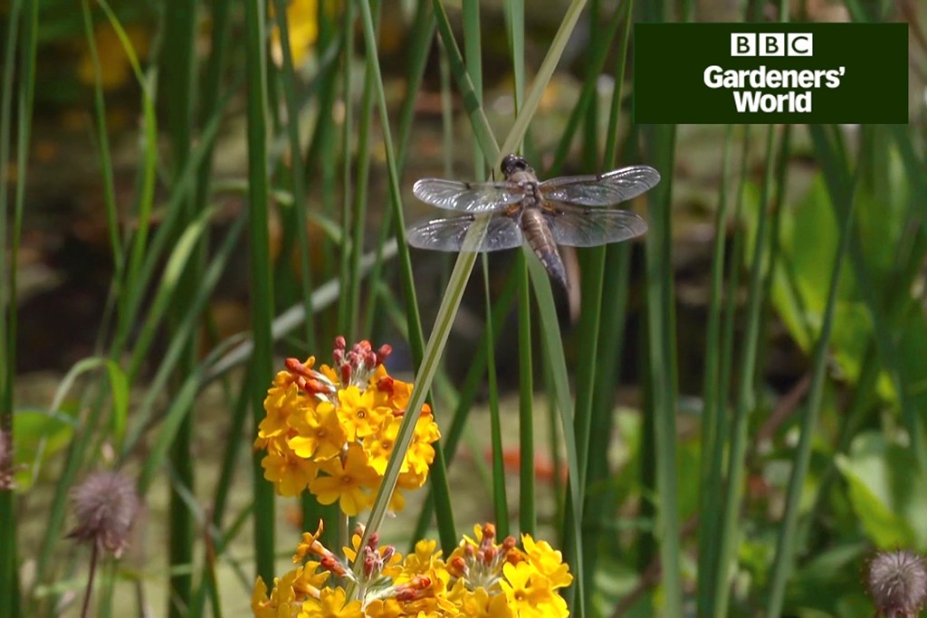 How to create a wildlife garden part five video
