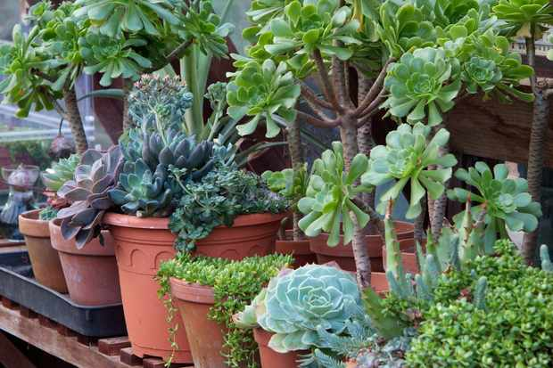plants-on-greenhouse-staging-2