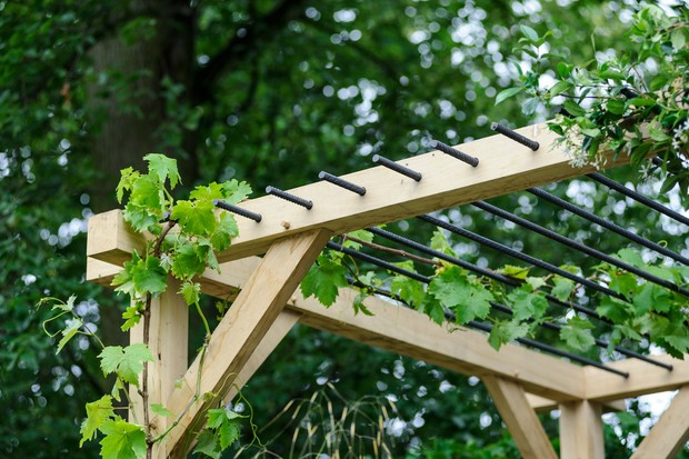 Best Climbing Plants For Pergolas Bbc Gardeners World