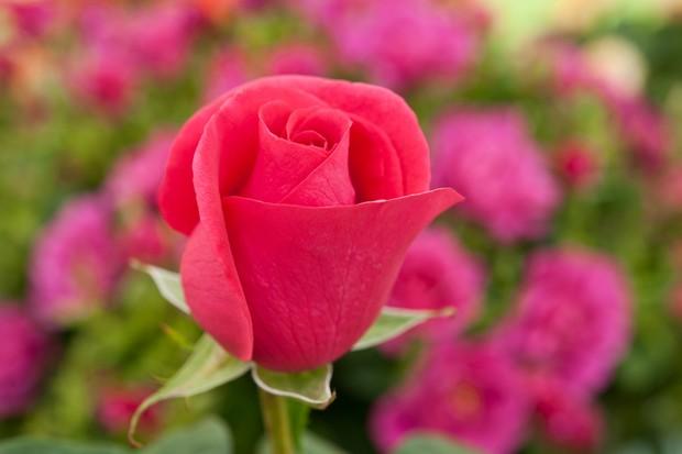 rosa-all-my-loving-5