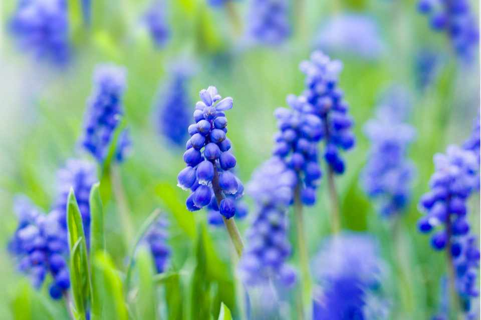 Spring Bulbs To Lift And Divide Gardenersworld