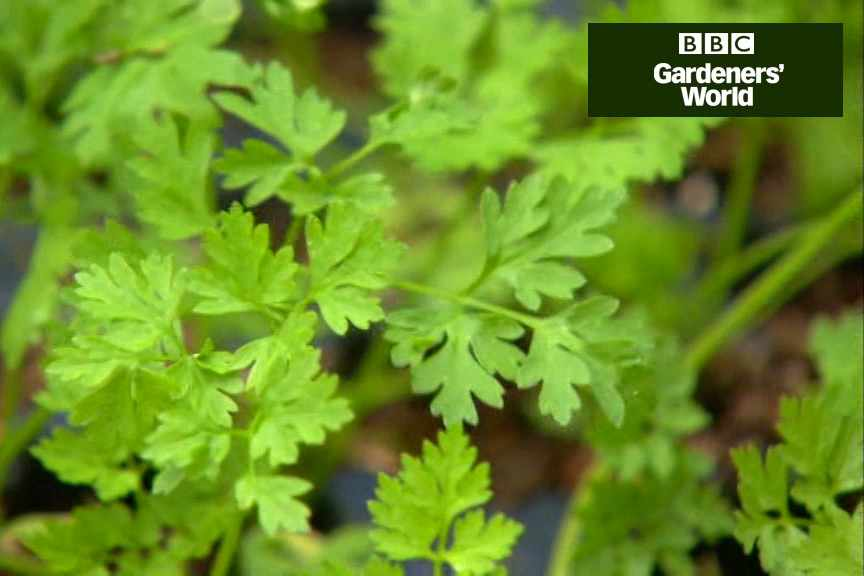 How to plant herbs video