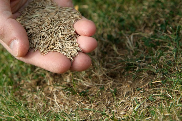 repairing-a-bare-patch-in-a-lawn-2
