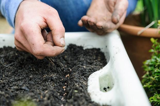 sowing-lettuce-in-a-belfast-sink-2