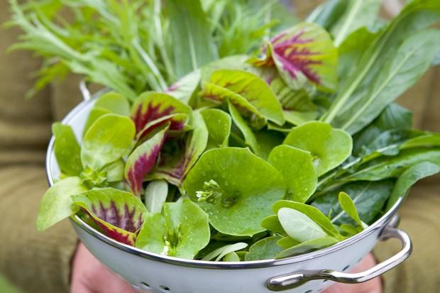 salad-leaves-11
