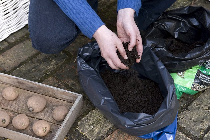 Quick Tips Which compost is best for growing potatoes in bags