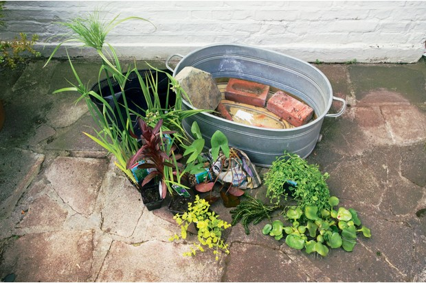 Pond in a pot - adding bricks to the pot