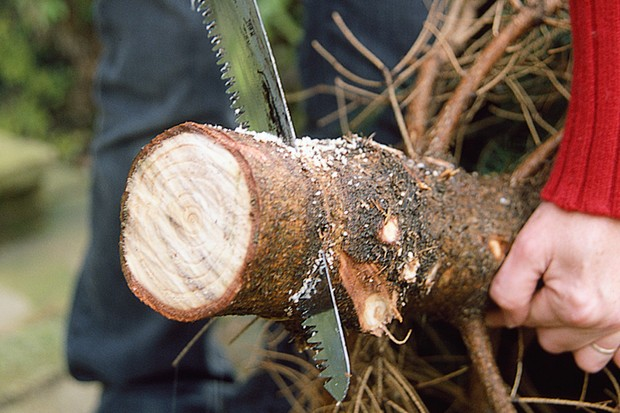 sawing-the-bottom-off-a-christmas-tree-3
