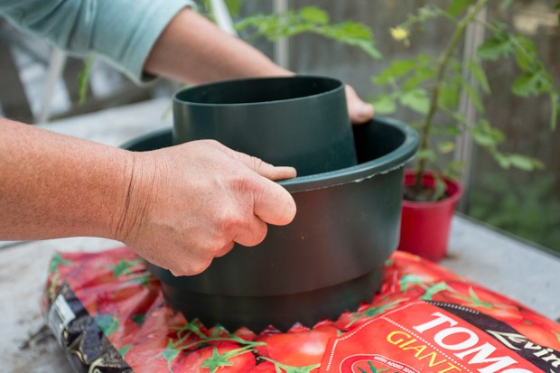 Placing ring over the planting hole in a growing bag