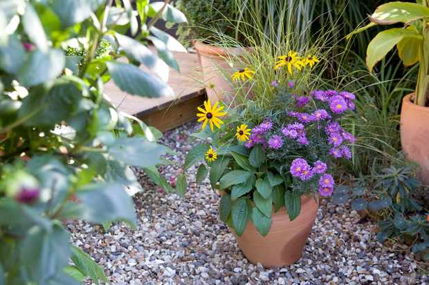 Autumn Container Ideas