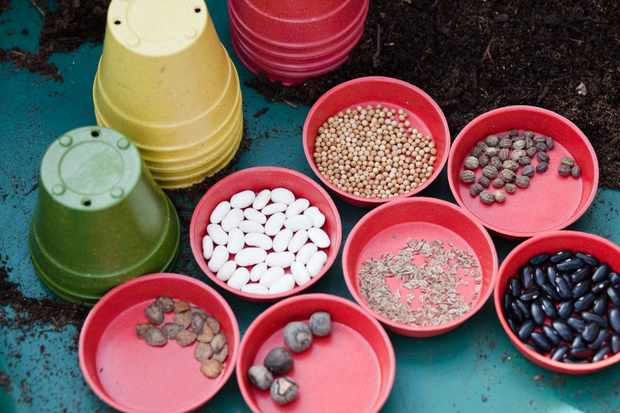 How to test seed viability