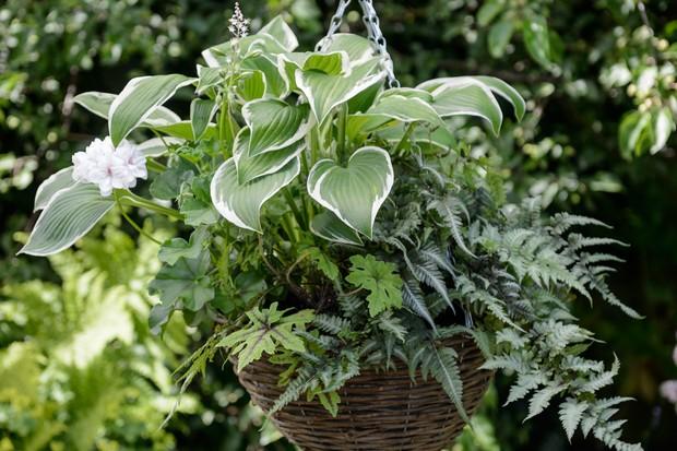 hosta-fern-and-tiarella-hanging-basket-display-2