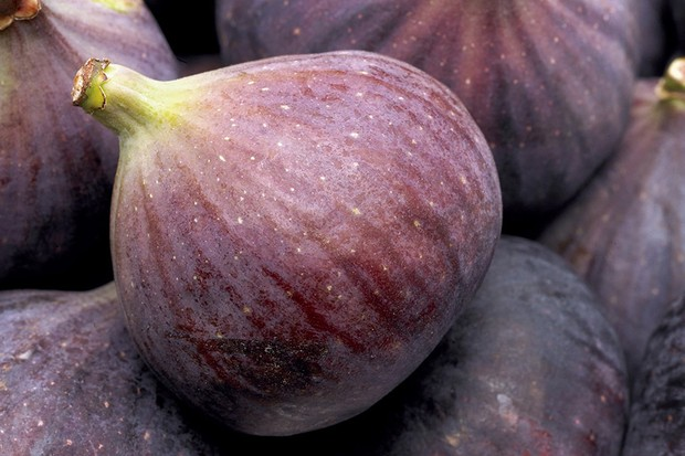 Why didn't my fig tree fruit?