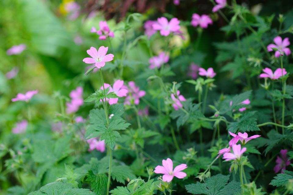 Ground Cover Plants For Shade Bbc Gardeners World Magazine