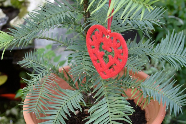 A potted wollemi pine hung with a festive decoration