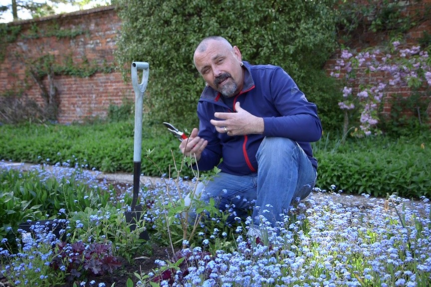 Pruning newly planted shrubs video