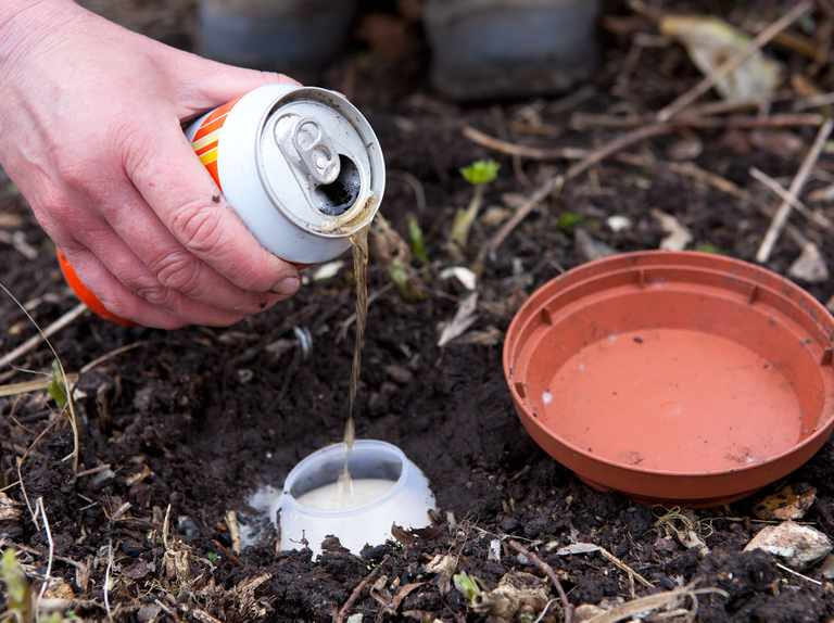 Stop Slugs Eating Young Plants Bbc Gardeners World Magazine