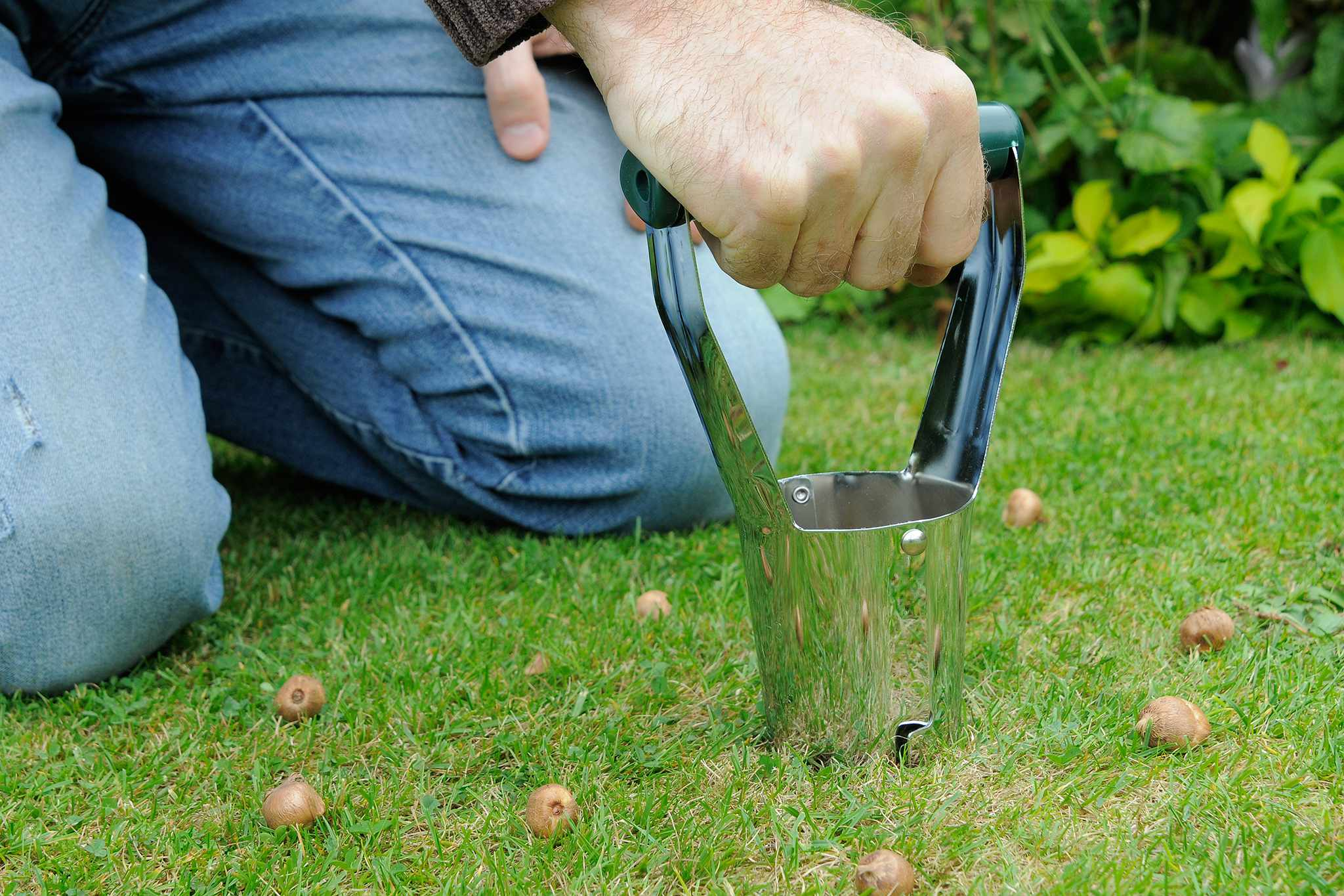 Planting bulbs in a lawn