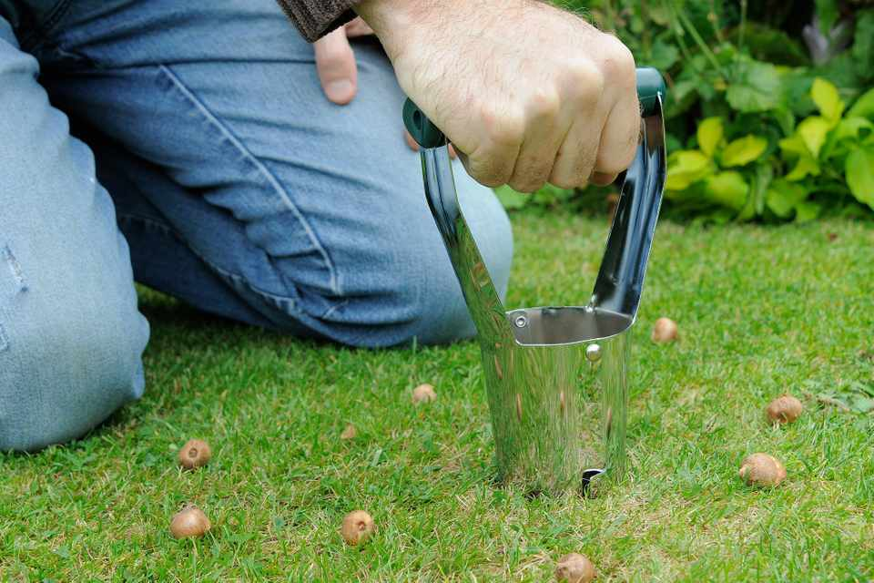 How to plant bulbs in lawns