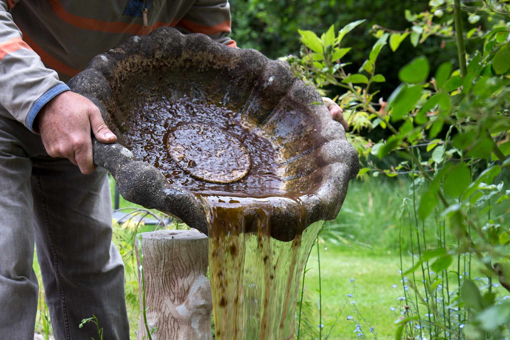 How To Maintain a Bird Bath