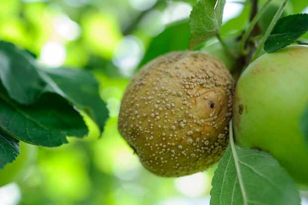 Fruit problems solved