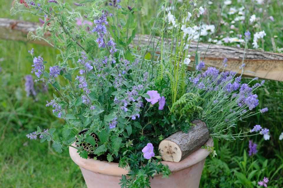How to make a nectar-rich container display