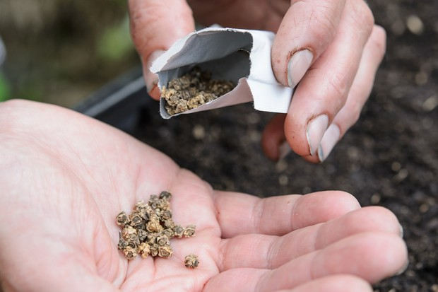 scatter-the-seeds-over-the-compost-2