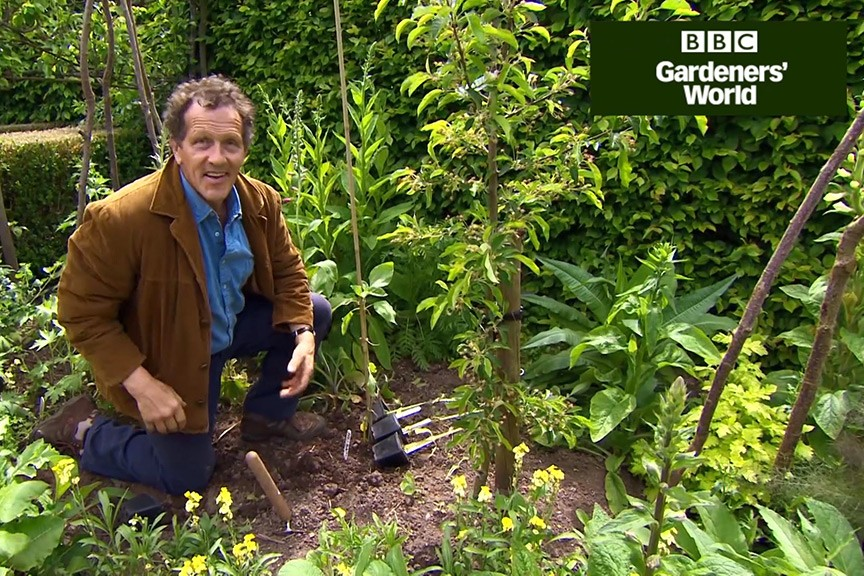 Monty Don's giant sunflower trial (part two) video