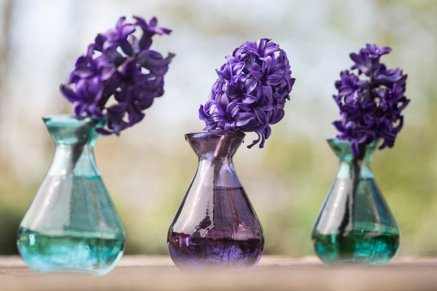 Hyacinth 'Spring Field'