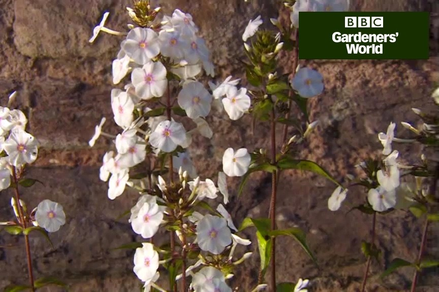 How to grow fragrant climbers video