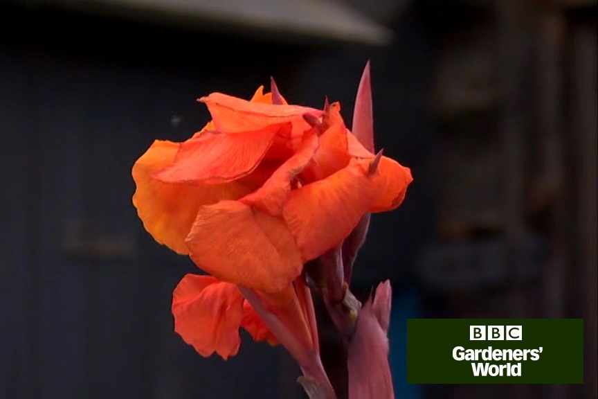 How to use cannas in borders video