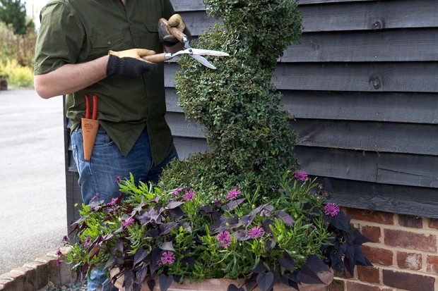 giving-topiary-the-final-trim-2
