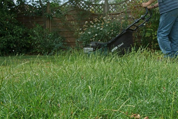 Mowing a lawn that has produced seed
