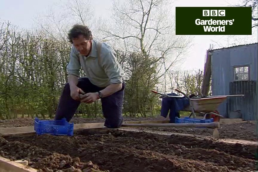 How to plant early potatoes