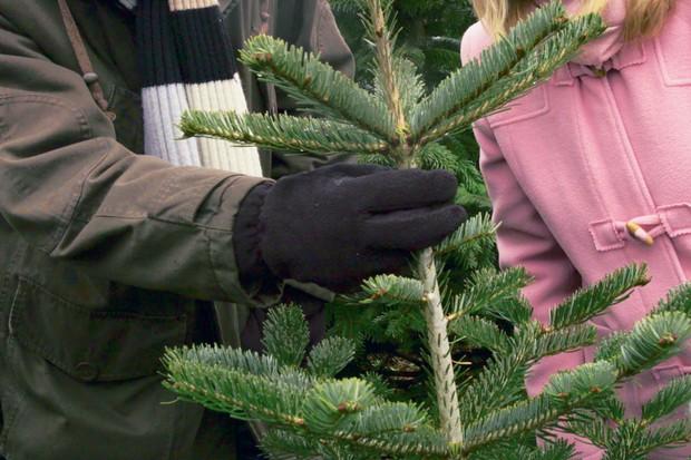 choosing-a-christmas-tree-3