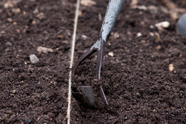 pull-soil-over-the-seeds-3