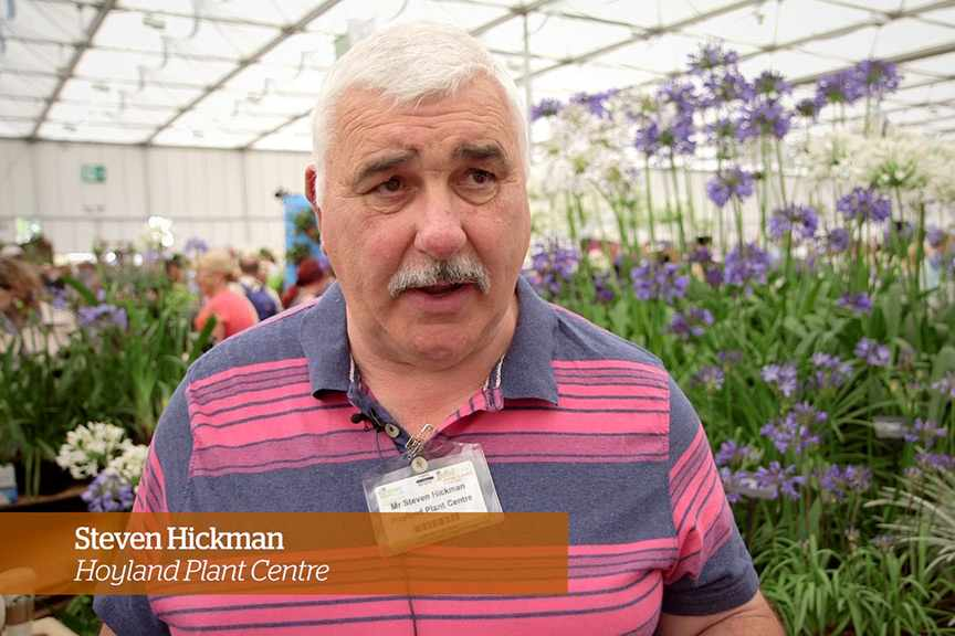 Caring for agapanthus Golden Rules