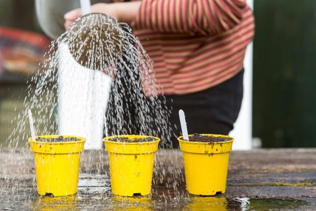 watering-in-seeds-5