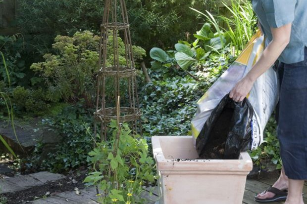 Adding compost to the pot