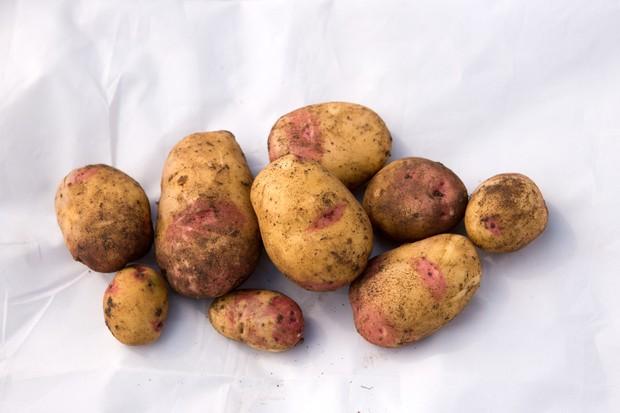 potato-king-edward-4