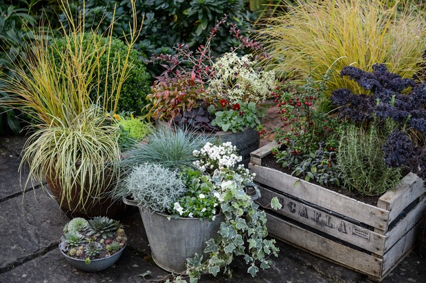 An assortment of containers planted with evergreens, grasses and colourful stems
