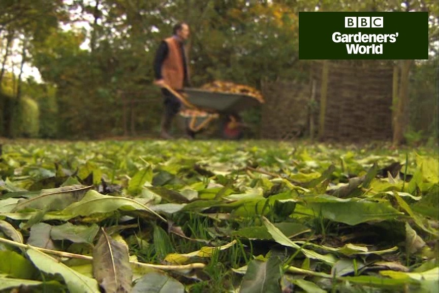 How to make leafmould from autumn leaves video