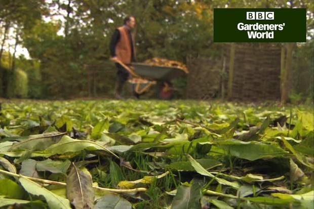 How to make leaf mould from autumn leaves